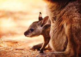 "Did You Know A ""Kangaroo Word"" Contains Its Own Synonym?"