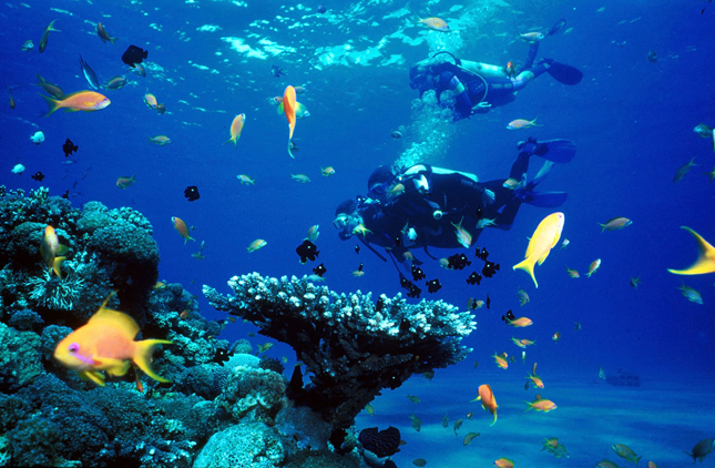 Scuba Dive in the Cayman Islands