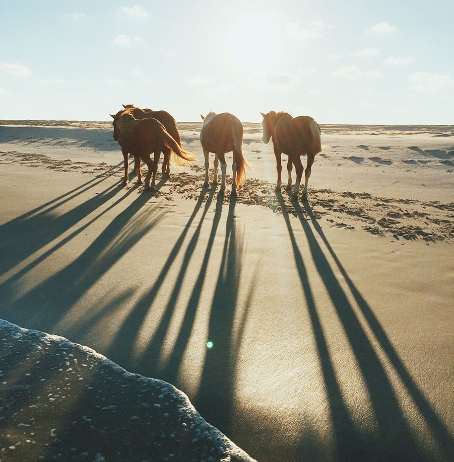 "To walk alongside wildlife: <a href=""https://www.nps.gov/asis/index.htm"" target=""_blank"">Assateague Island</a>, Maryland and Virginia"