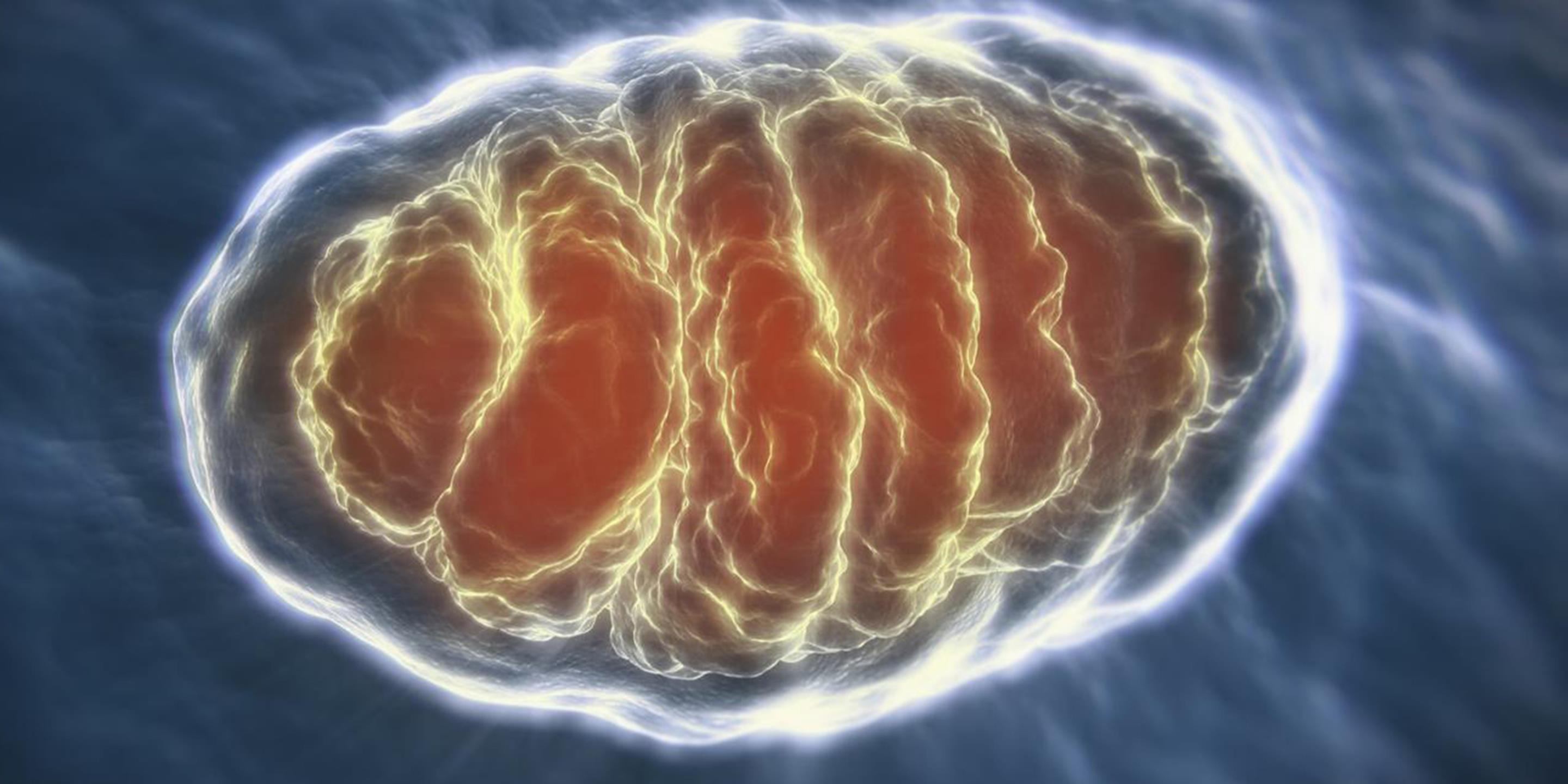 Image result for mitochondria