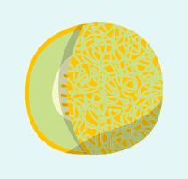 Honeydew melon icon