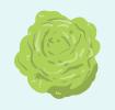 Head of lettuce icon