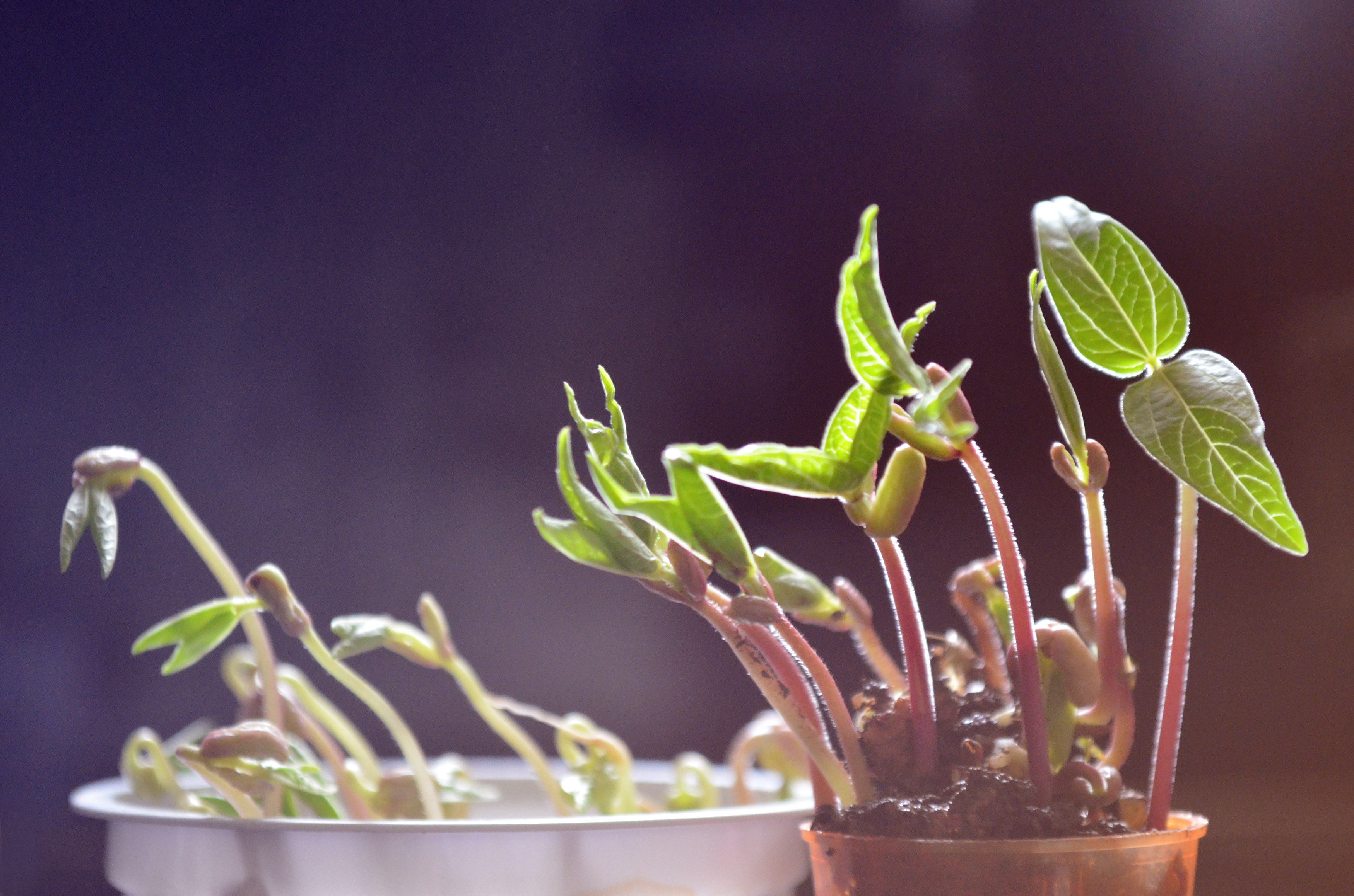 growing-plants