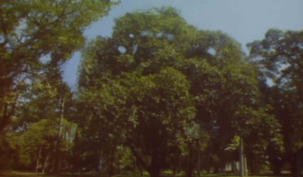 BIFF Offscreen: One tree
