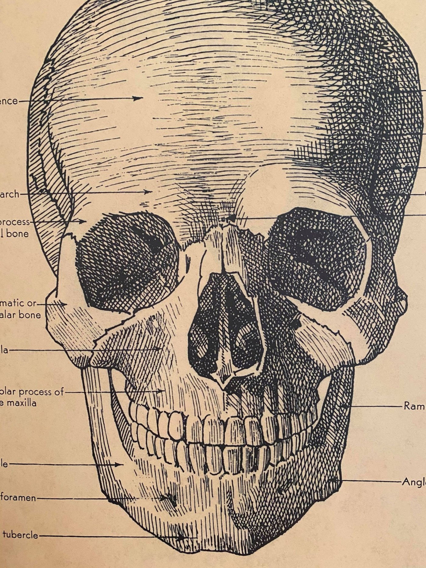 Poster of a skull