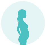 Second Trimester of Pregnancy