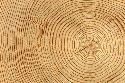 An abstract image of wood.