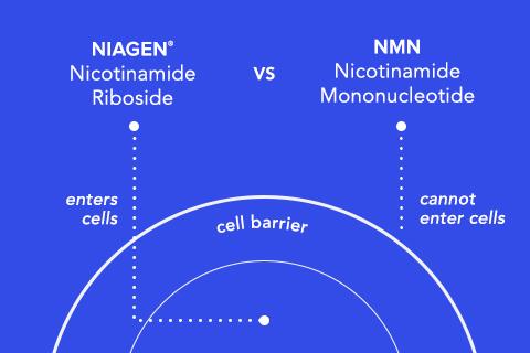 NR vs NMN diagram