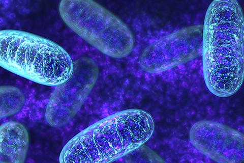 mitochondria generating energy