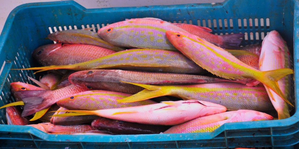 A crate of colourful freshly caught fish in a crate