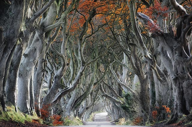 Dark-Hedges-Ballmoney-in-Fall