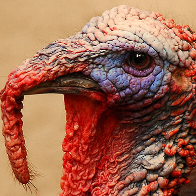 Neuf anecdotes méconnues sur Thanksgiving