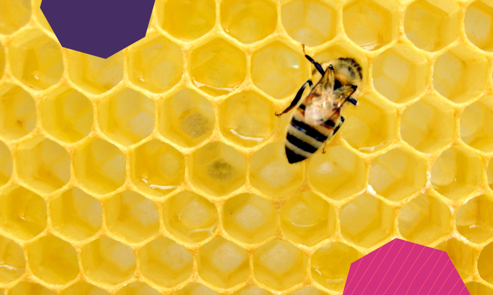 "a single bee on a yellow honeycomb""A"