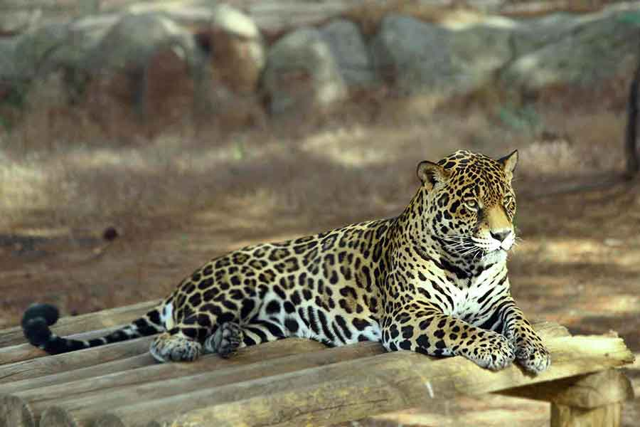 Türkiye'deki En Büyük Hayvanat Bahçeleri Listesi?fit=thumb&w=418&h=152&q=80