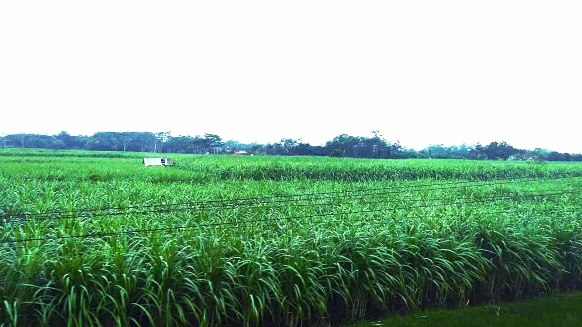 En Çok Şeker Üretimi Yapan Ülkeler?fit=thumb&w=418&h=152&q=80
