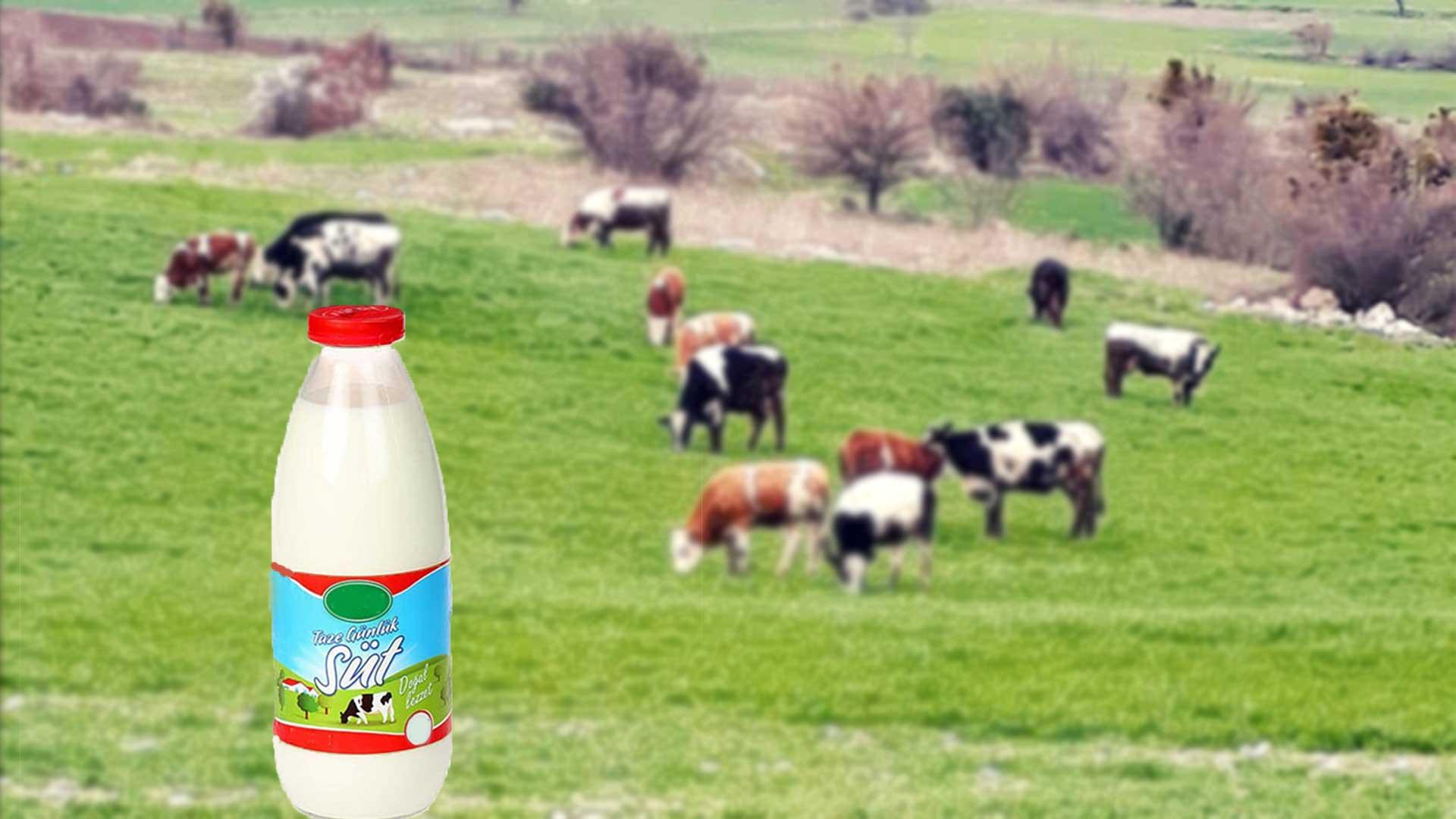 En Çok Süt Üretimi Yapan Ülkeler?fit=thumb&w=418&h=152&q=80