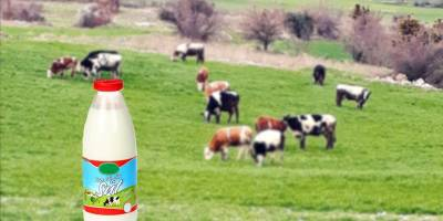 En Çok Süt Üretimi Yapan Ülkeler