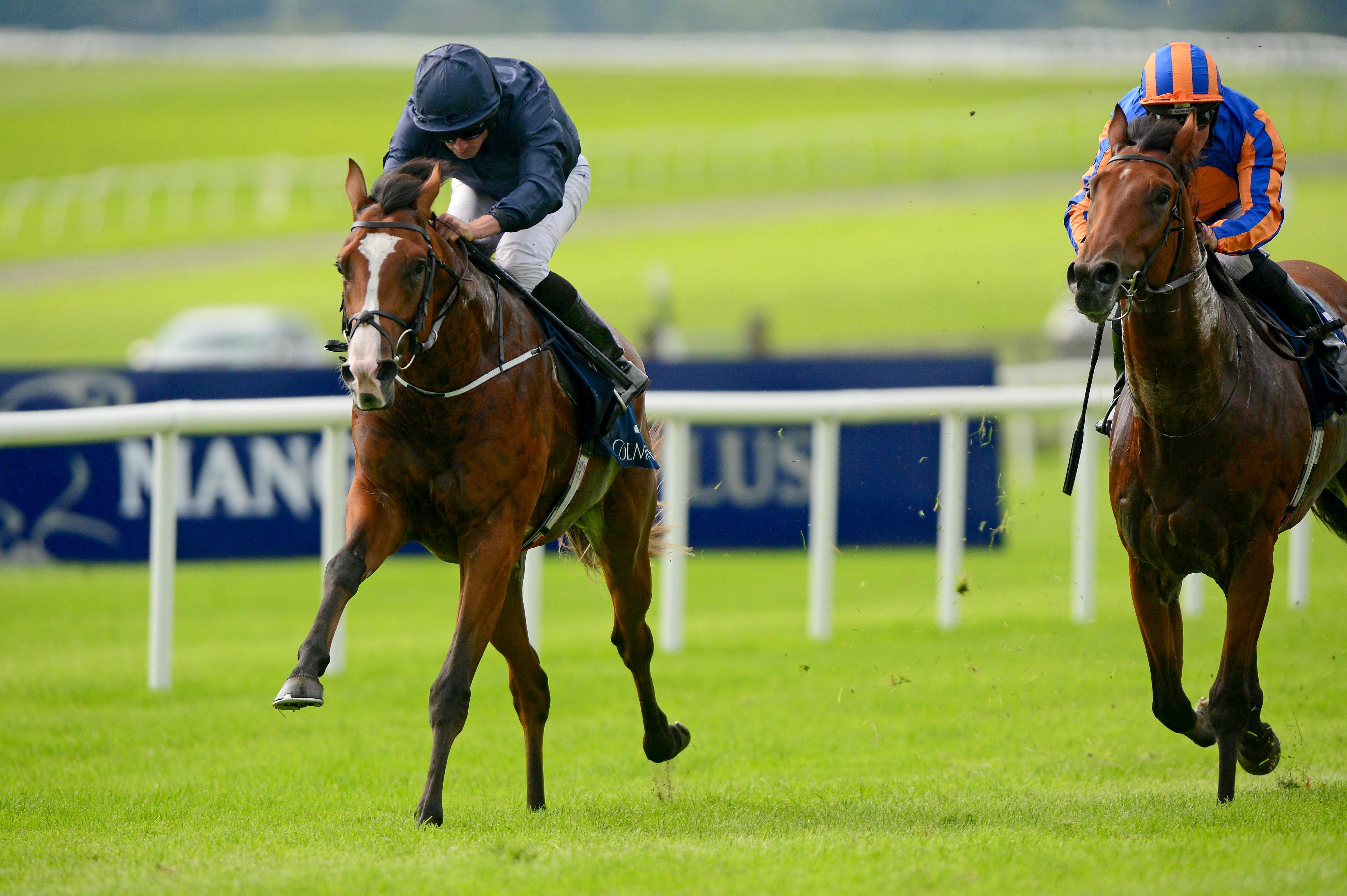 Picture perfect: Anthony Van Dyck is second favourite for the Derby (FocusOnRacing)