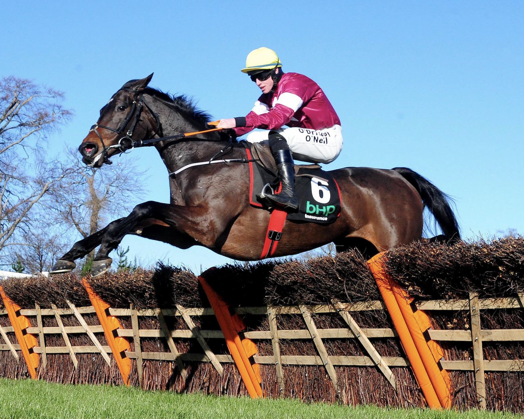 Apple's Jade will prove hard to beat in the Champion Hurdle