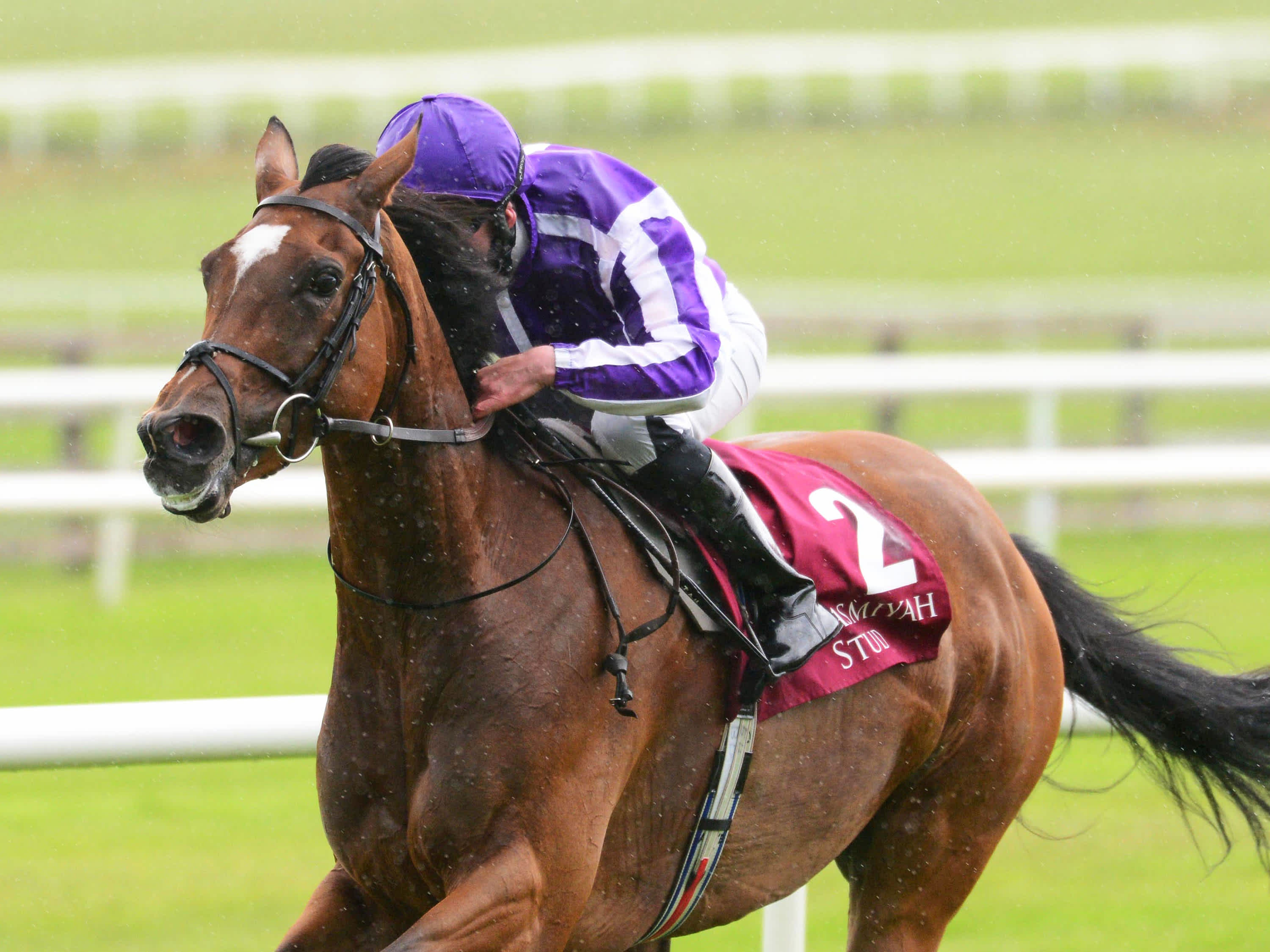 pretty polly stakes betting odds