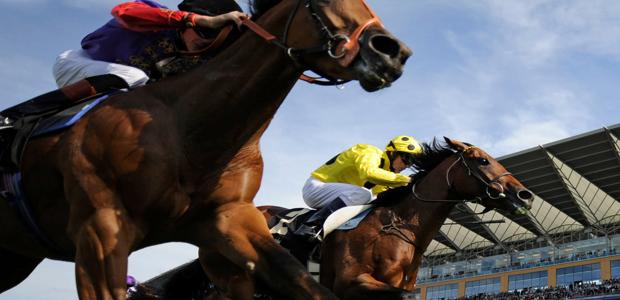 Horse racing hdhut blogspot com 19