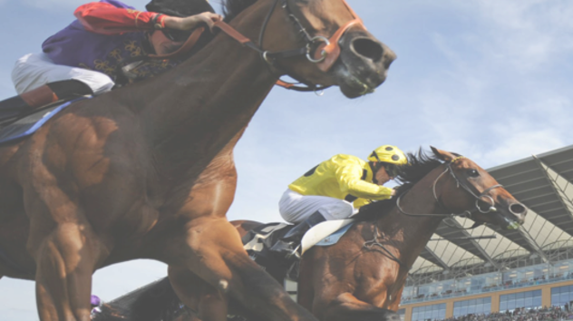 Kenilworth Racecourse: Today's Results & Betting