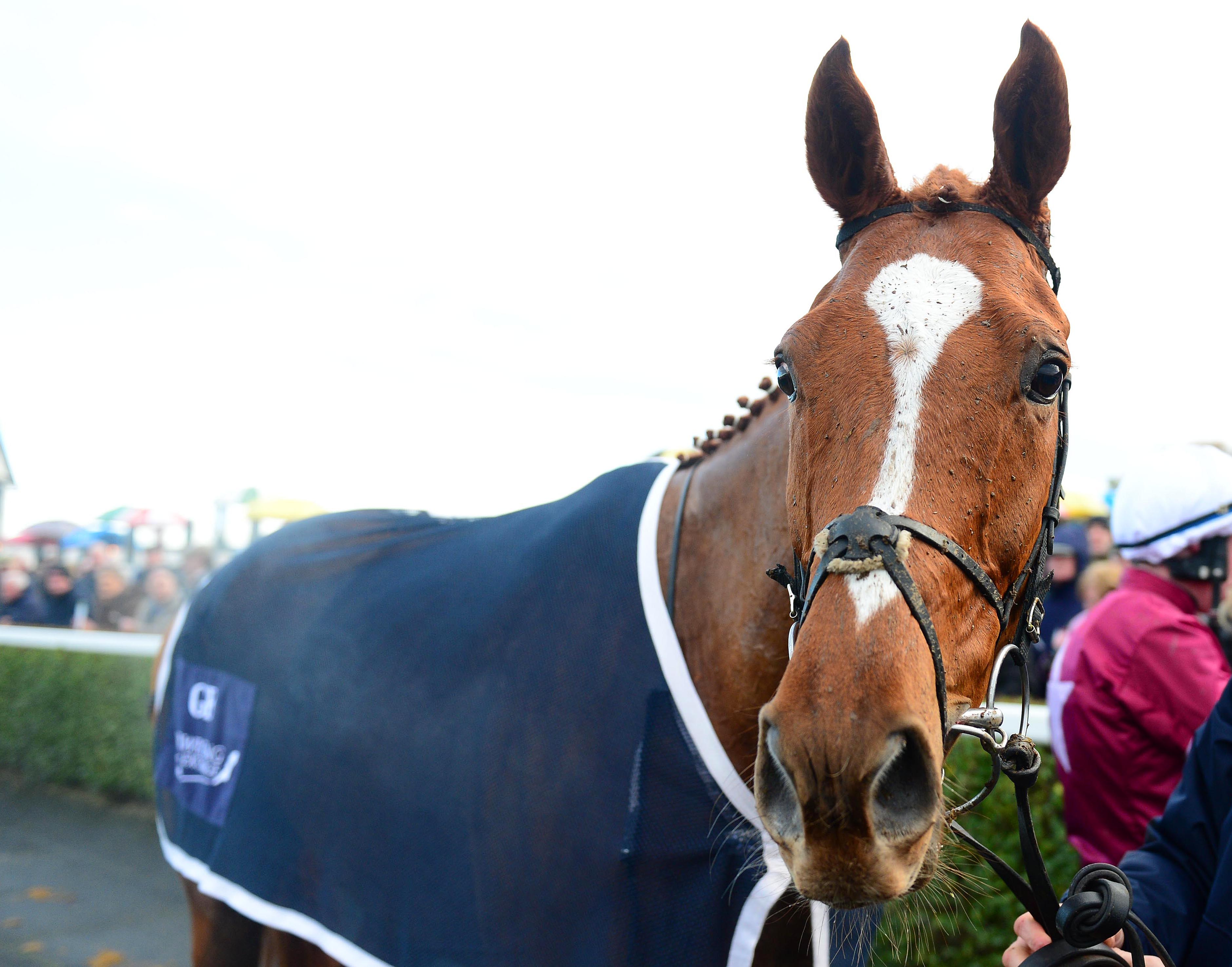 It is unclear whether Samcro will run over hurdles or fences this season. (Racingfotos)