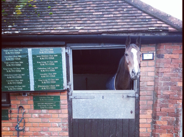Kauto Star in stable