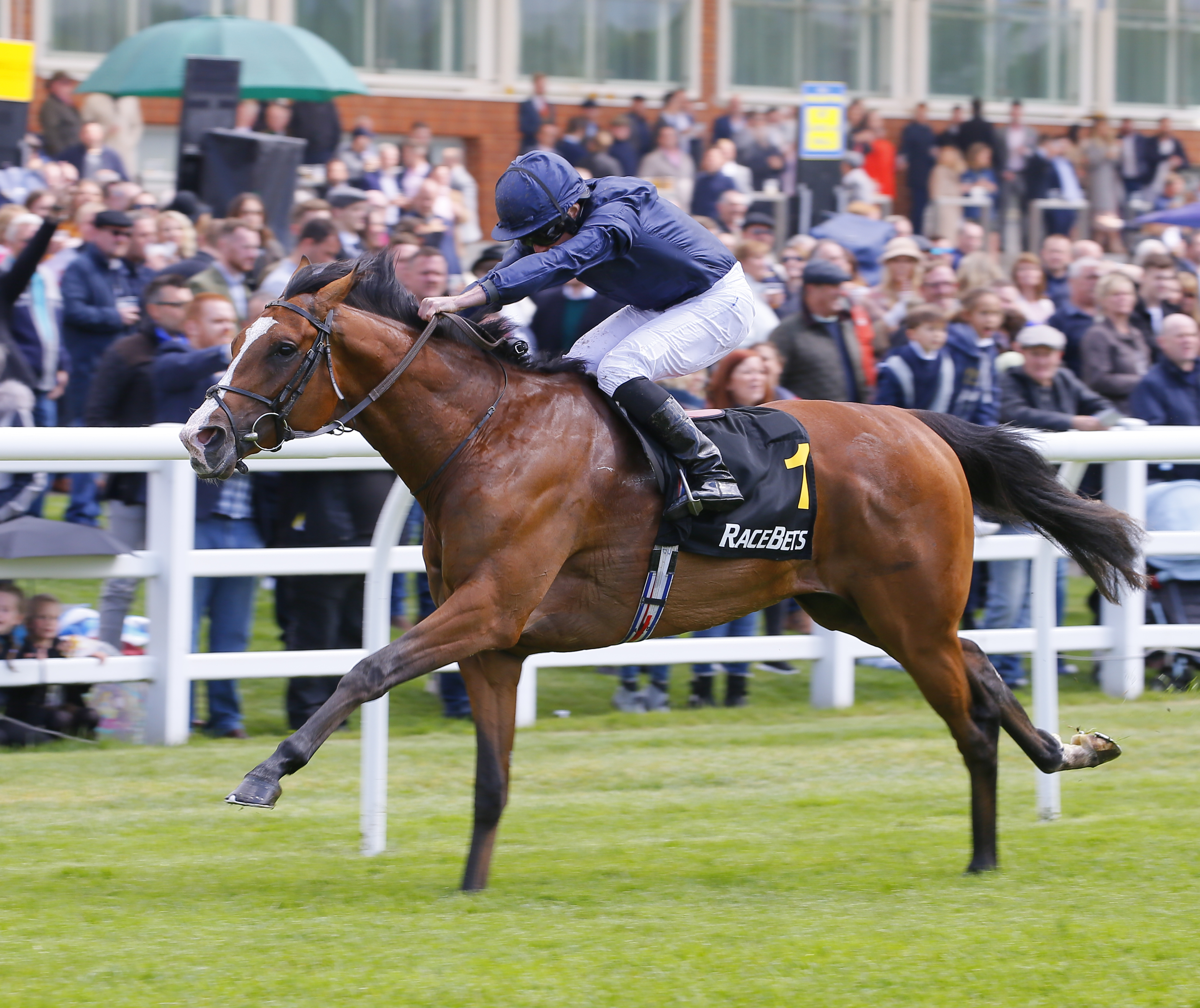 Anthony Van Dyck has been shortened for the Investec Derby (Focusonracing)