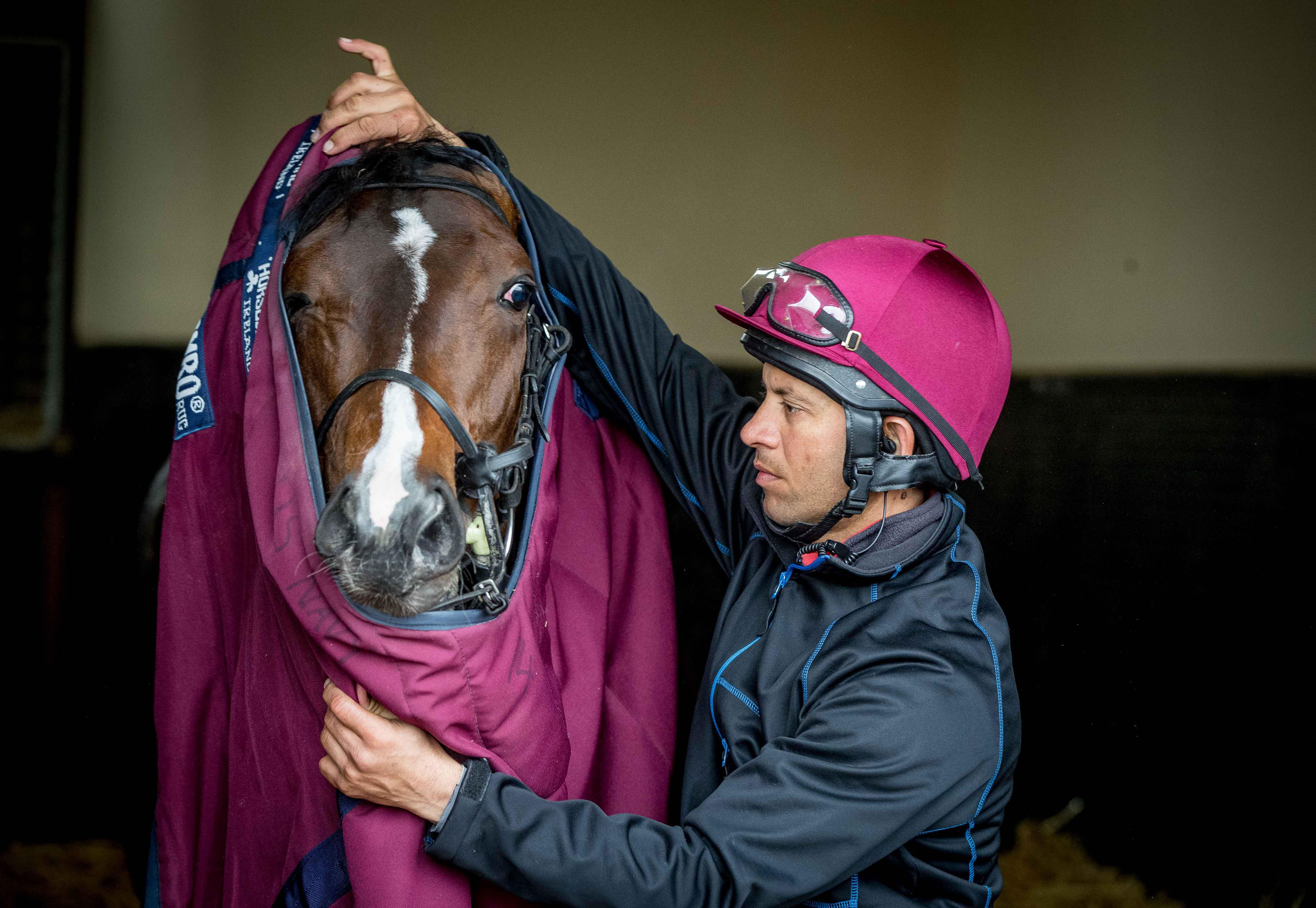 Ballydoyle - groom kurram sheikh putting the sheet on us navy flag - racingfotos