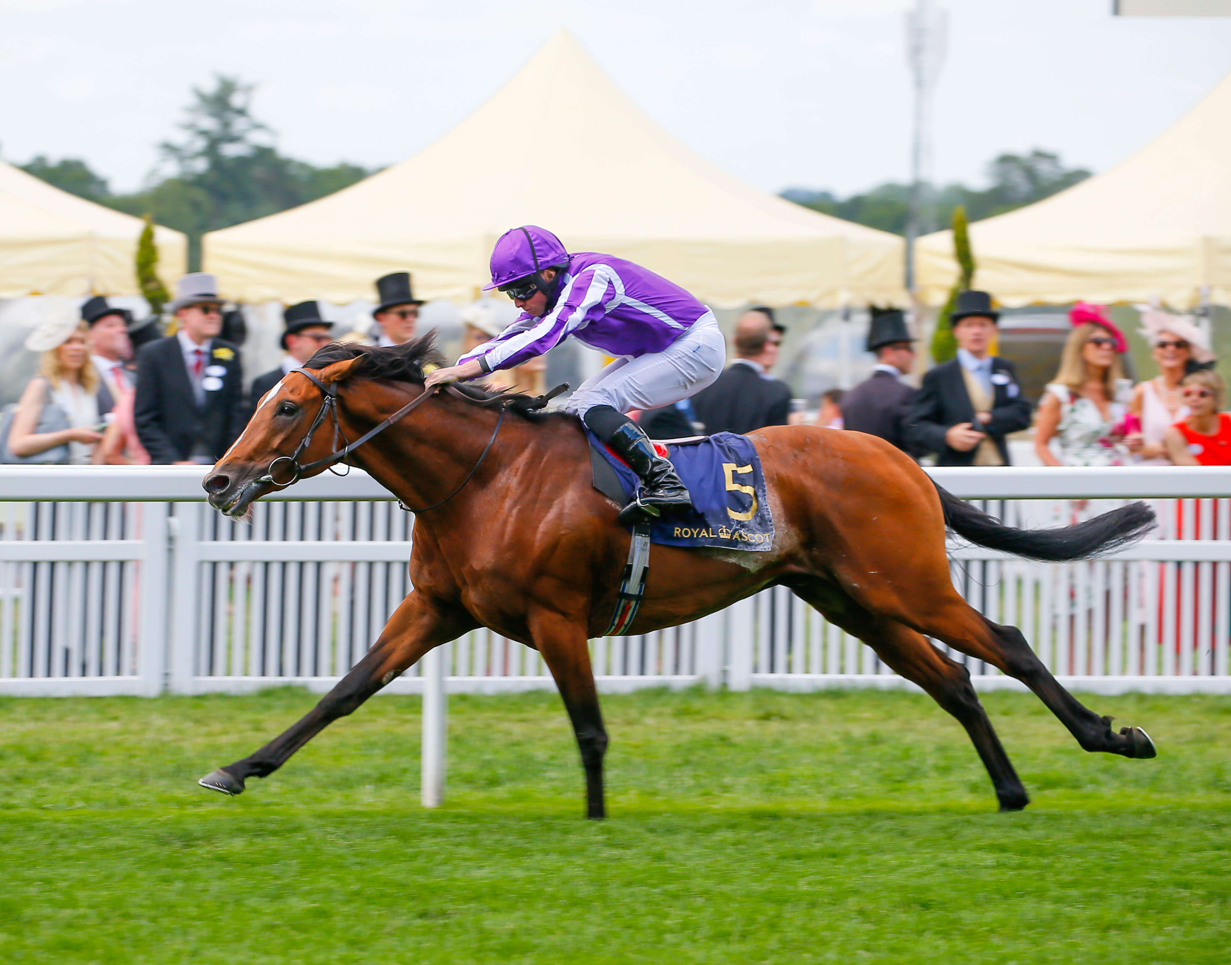 Japan seeks to cap a great weekend for Aidan O'Brien (Pic: Focusonracing)