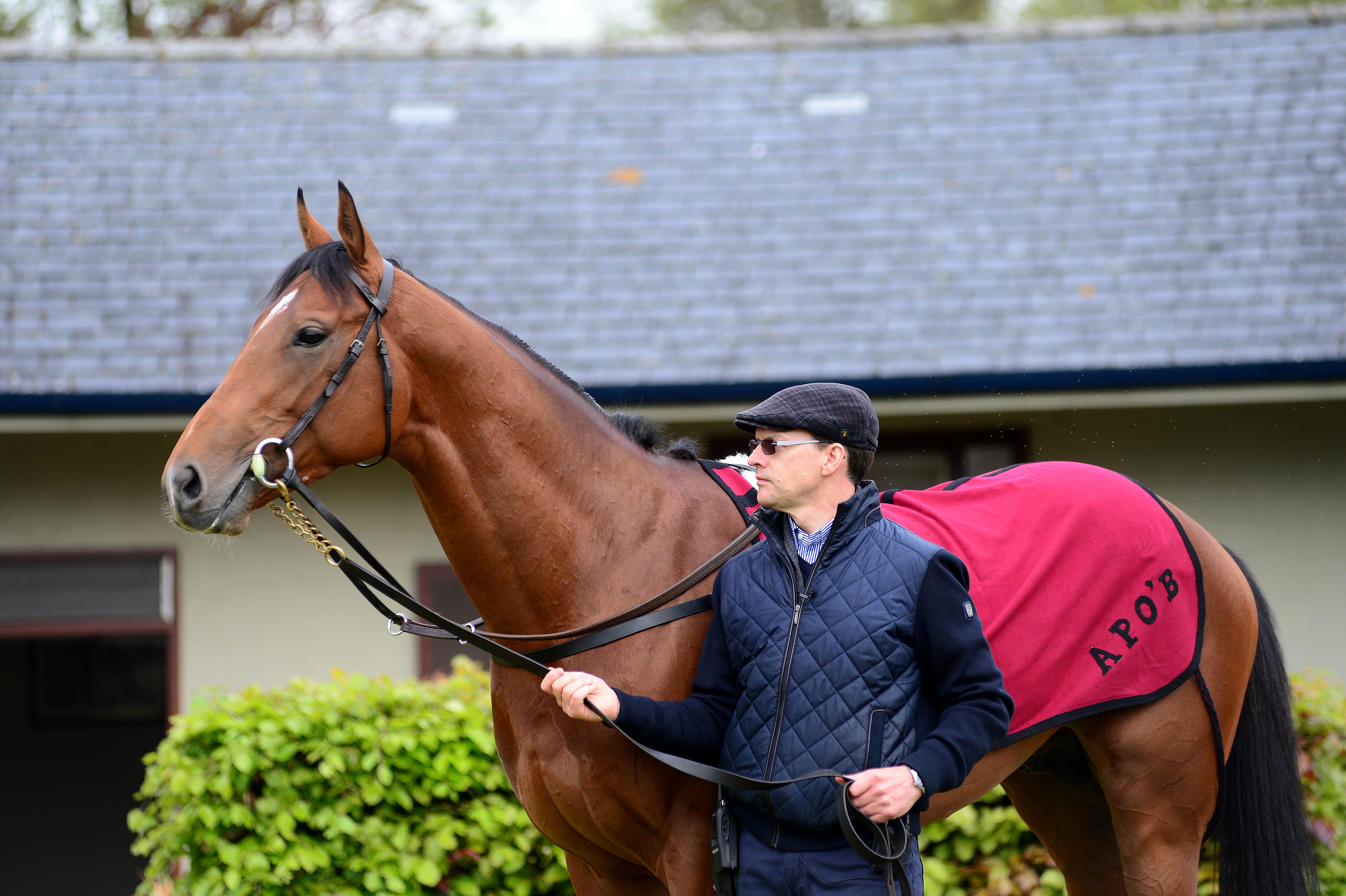 Saxon warrior - aidan o'brien - ballydoyle - racingfotos