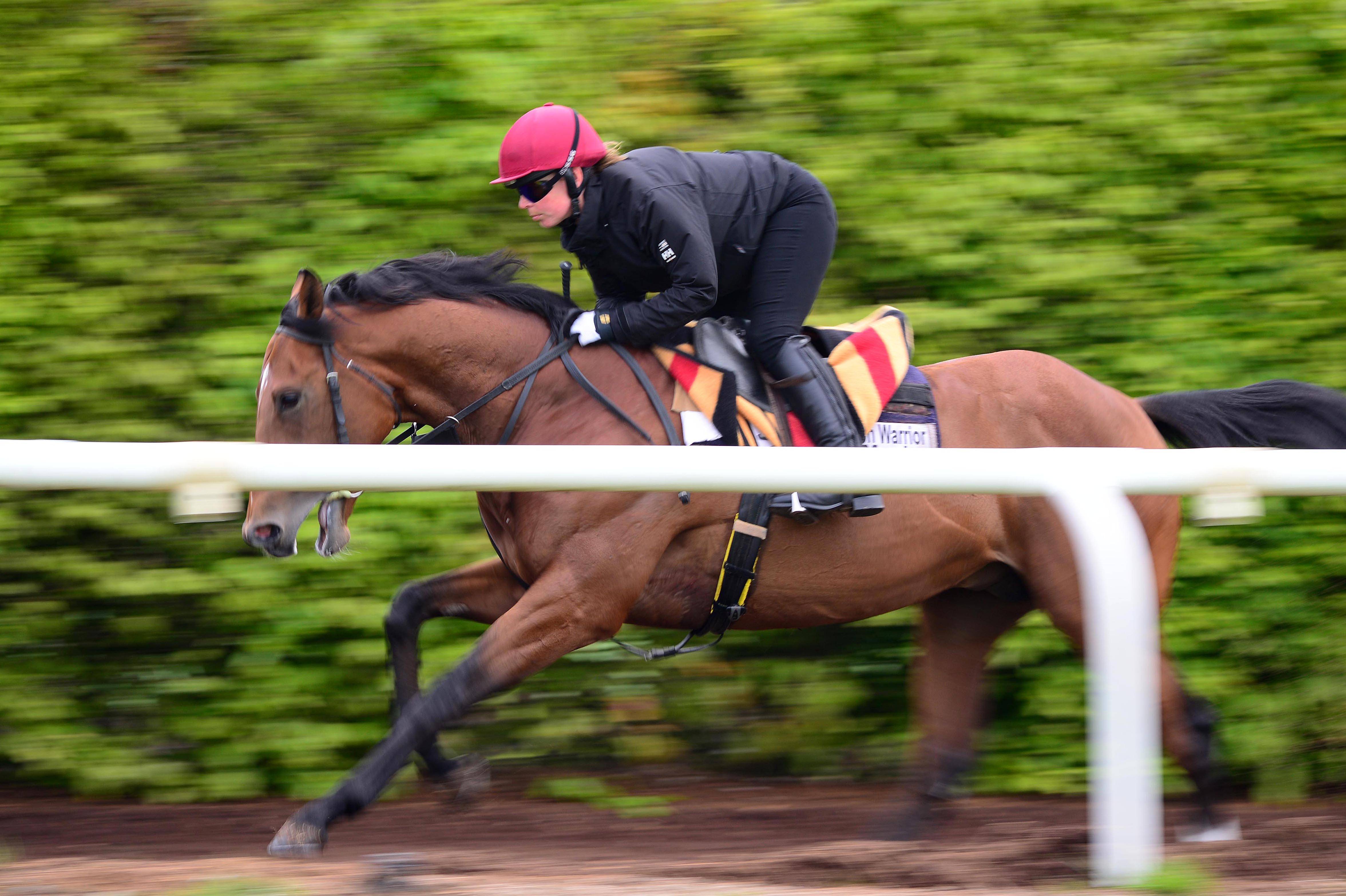 Saxon warrior - ballydoyle gallops - racingfotos