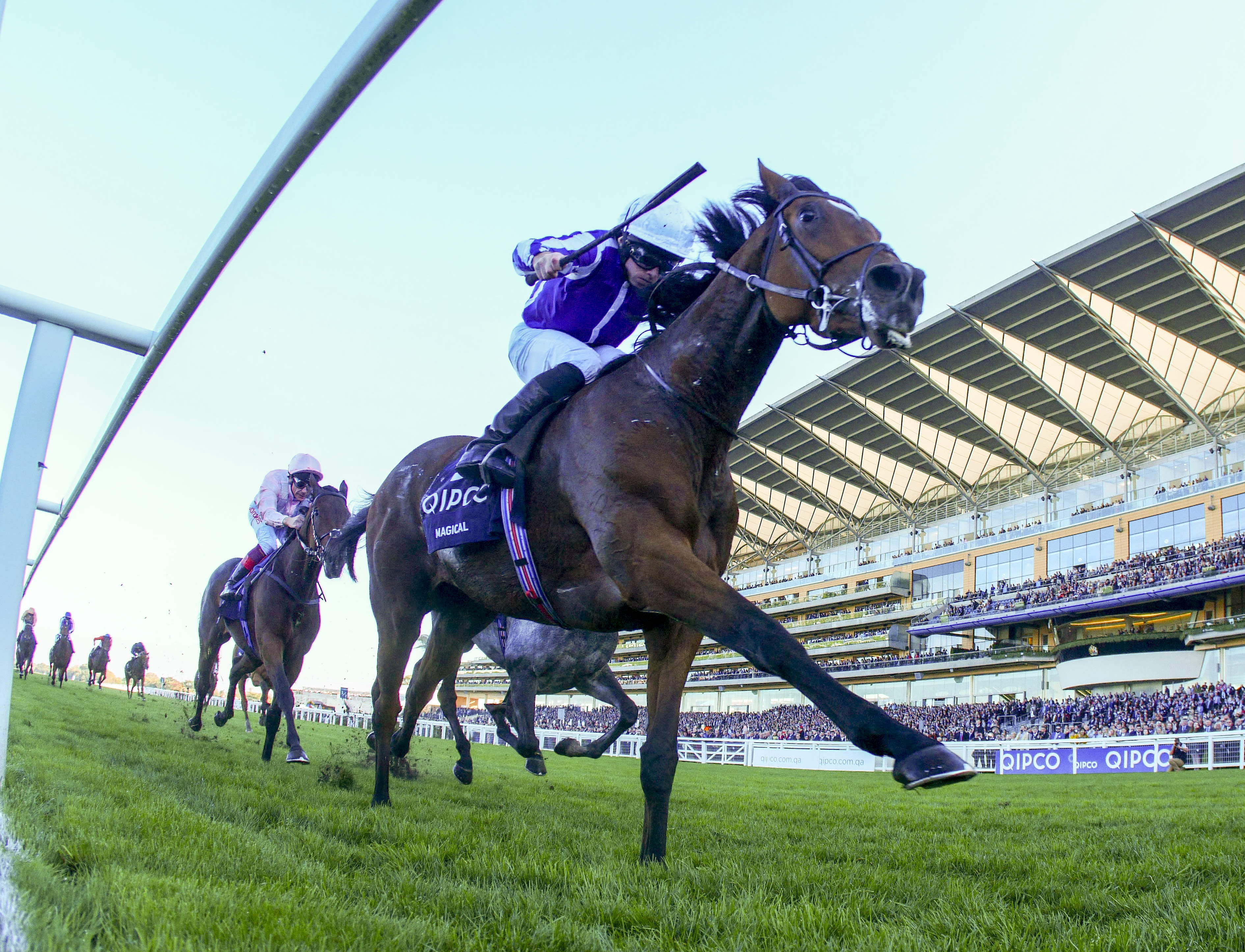 Magical is among a strong team that Aidan O'Brien is planninig on running on QIPCO British Champions Day