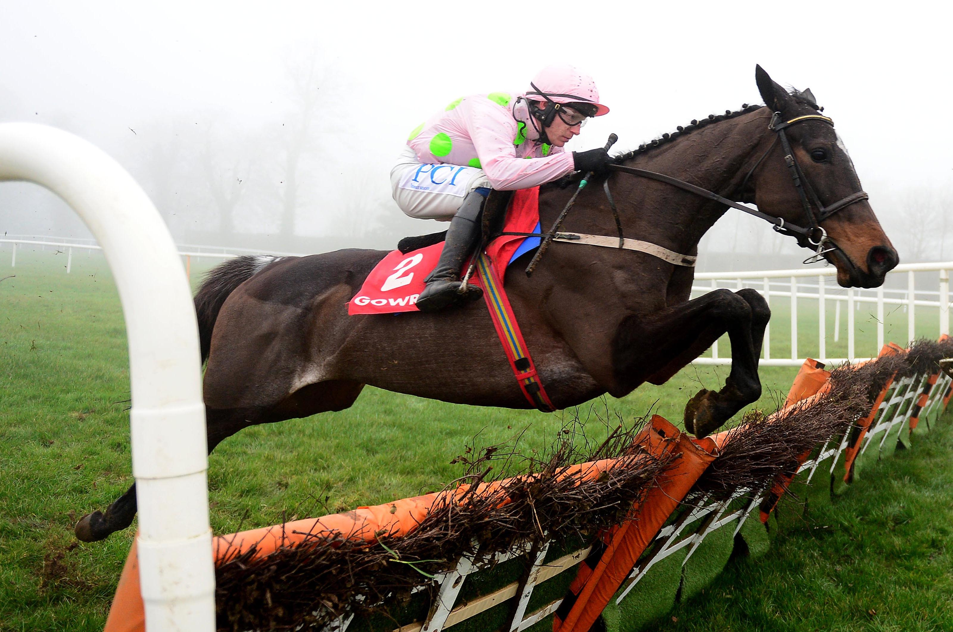 Benie Des Dieux- has unfinished business at Cheltenham (Focusonracing)