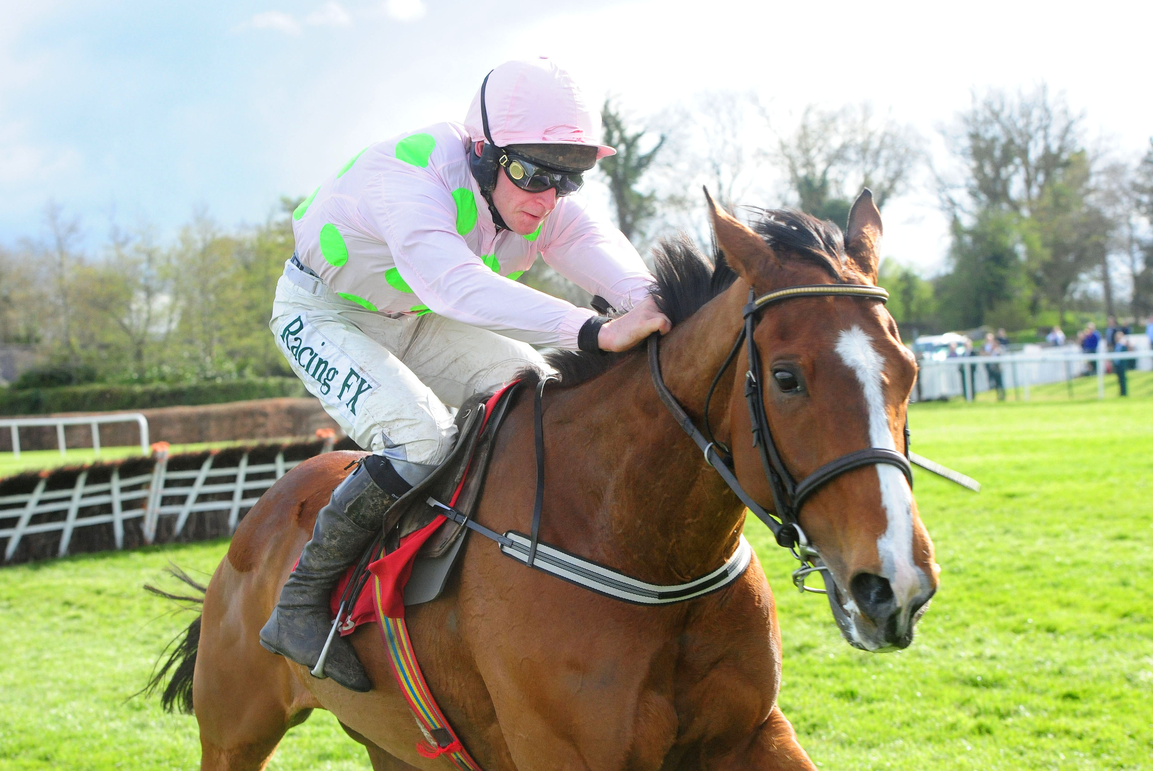 Faugheen had been a short price to win a second Champion Hurdle before news of his injury was revealed. Pic: Racingfotos