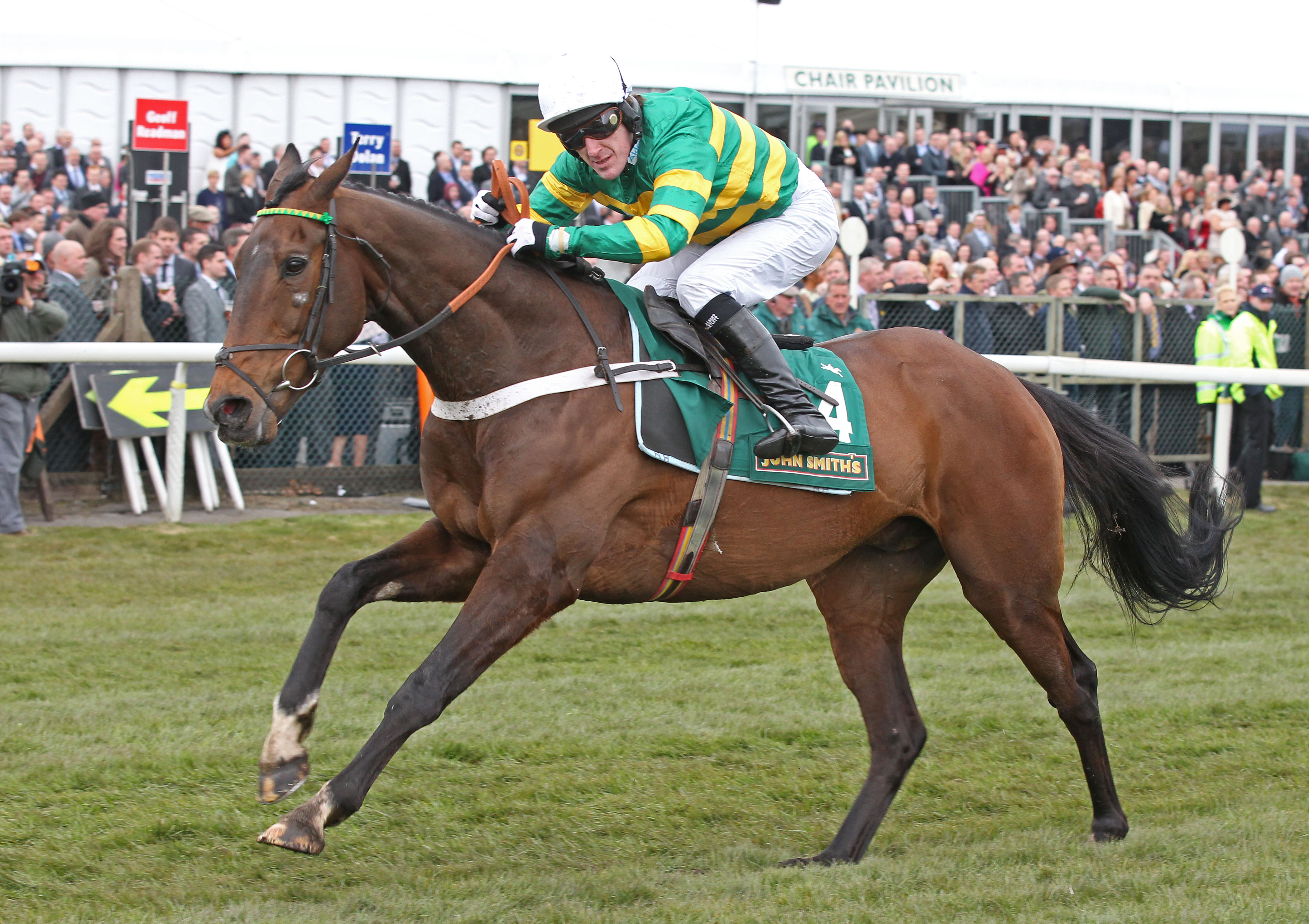 My Tent Or Yours finished runner-up at the Cheltenham Festival on four occasions