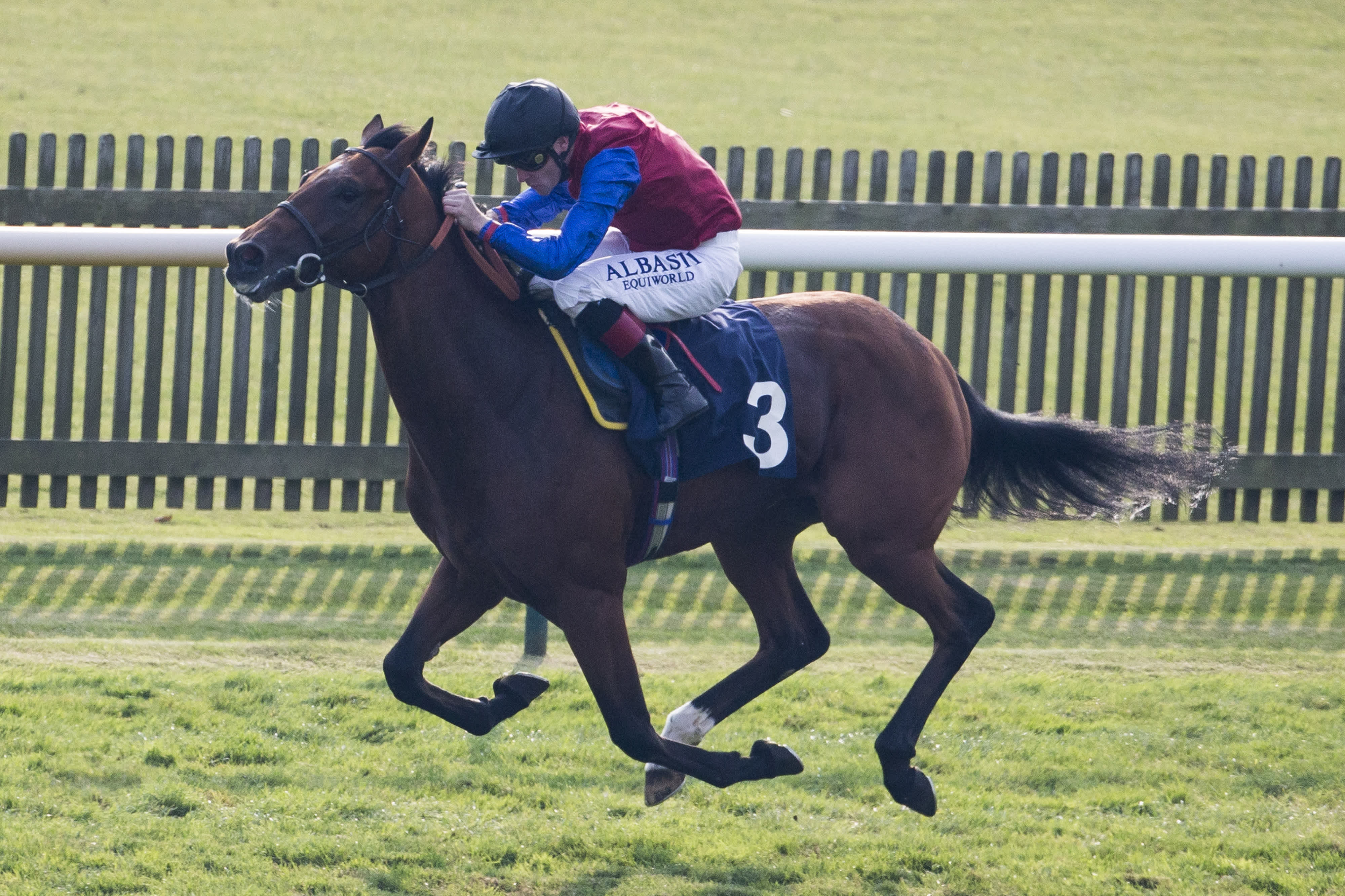 Dovecote preview: Carntop puts Cheltenham Festival claims on the