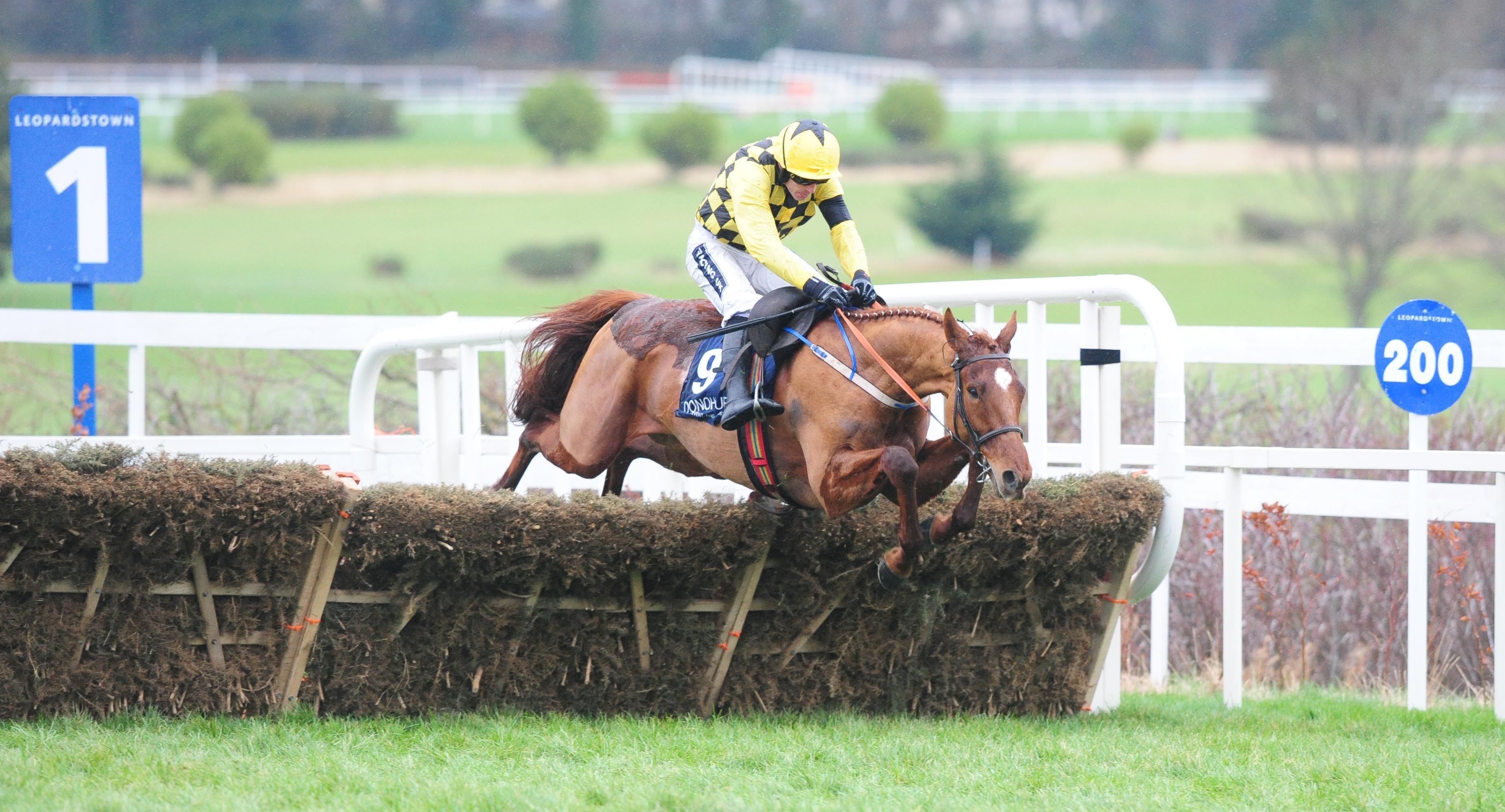 Melon found only Buveur D'Air too good in last season's Champion Hurdle