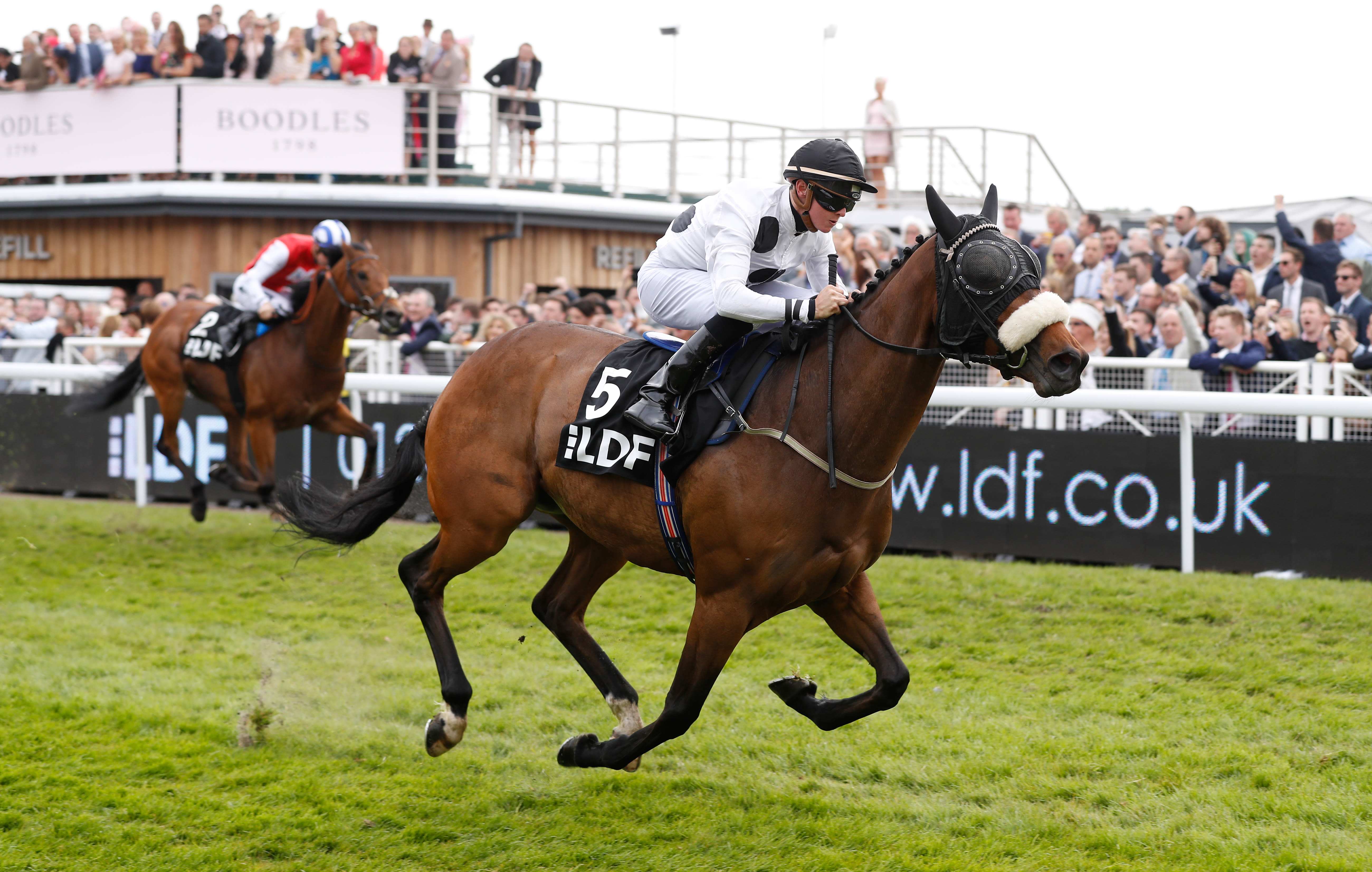 Judicial is on course to run at Newbury this weekend