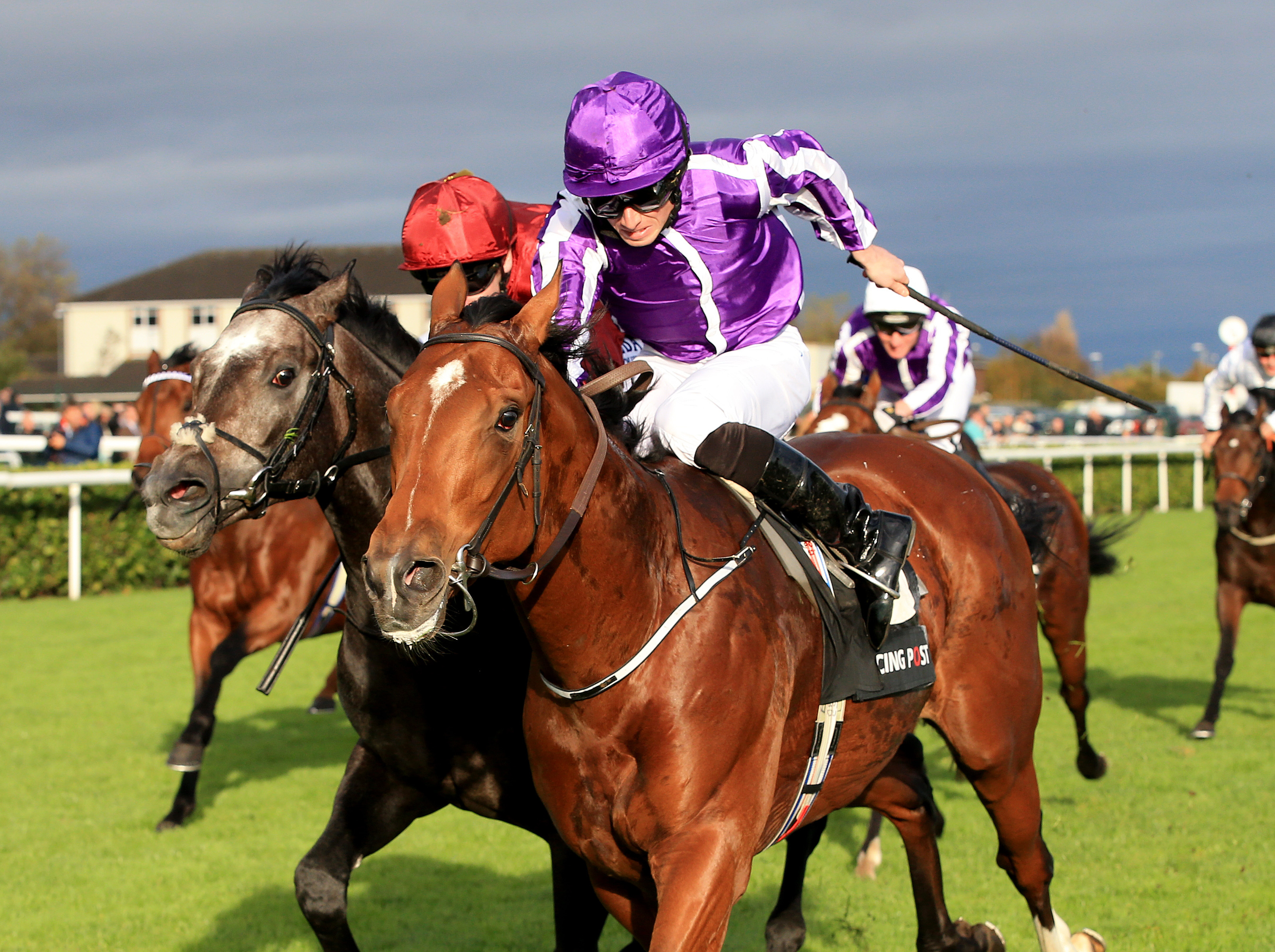 Image result for Saxon Warrior 2000 guineas