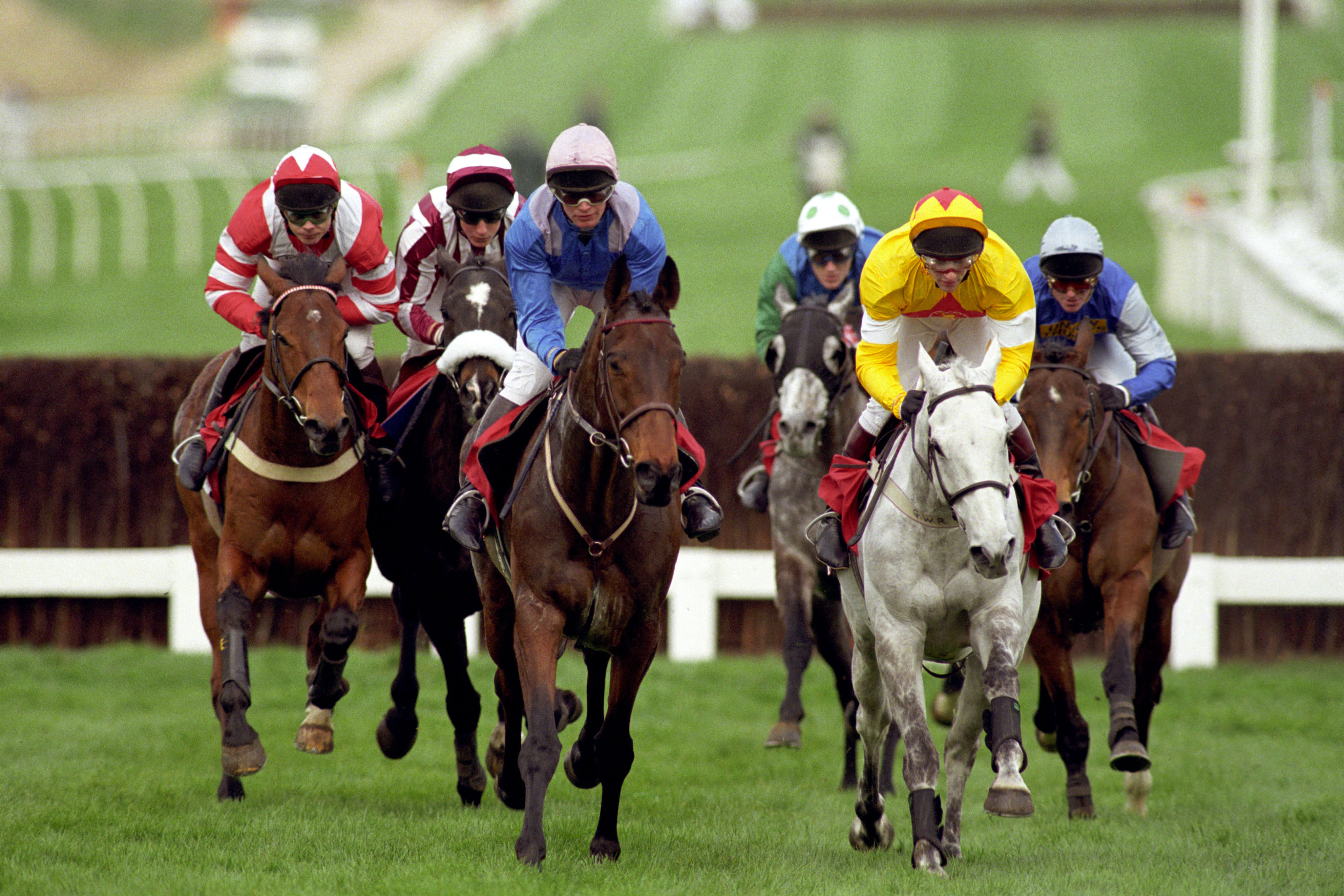 The grey, One Man, was a hugely popular winner