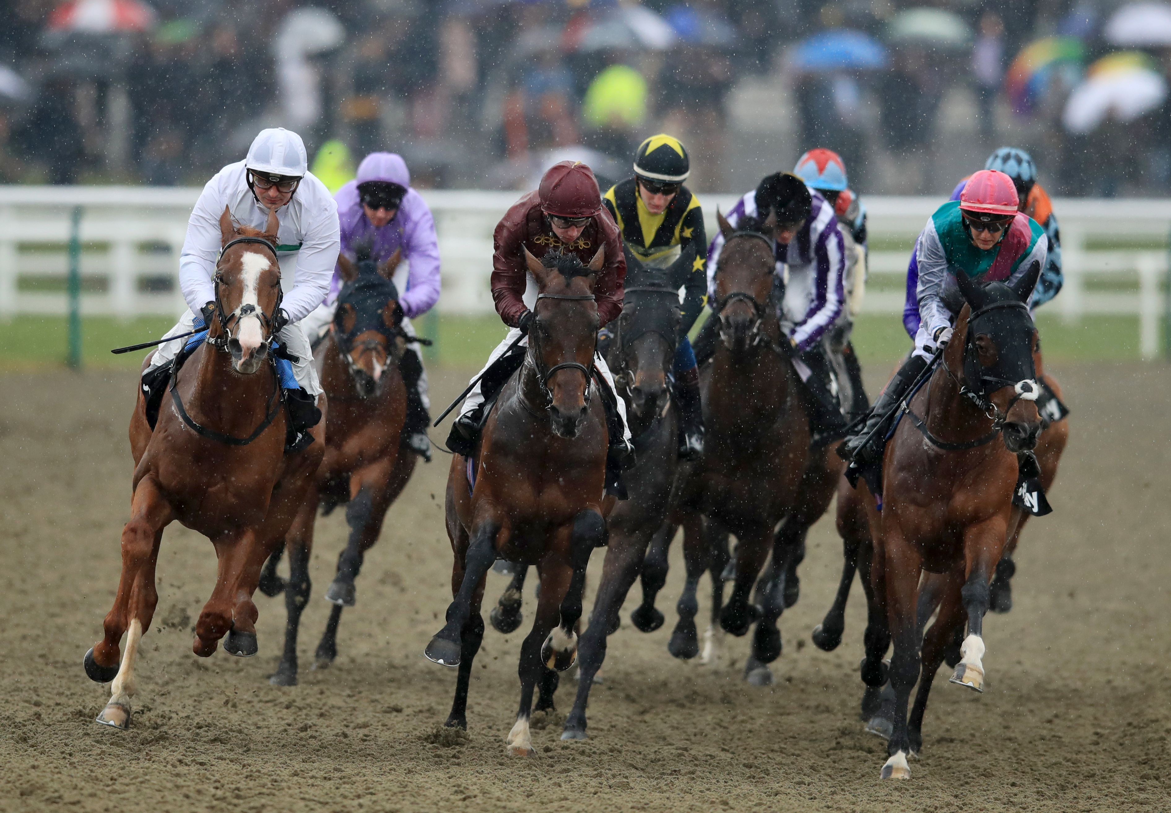 Rachel Candelora S Wednesday Tips Bet The House At Ascot
