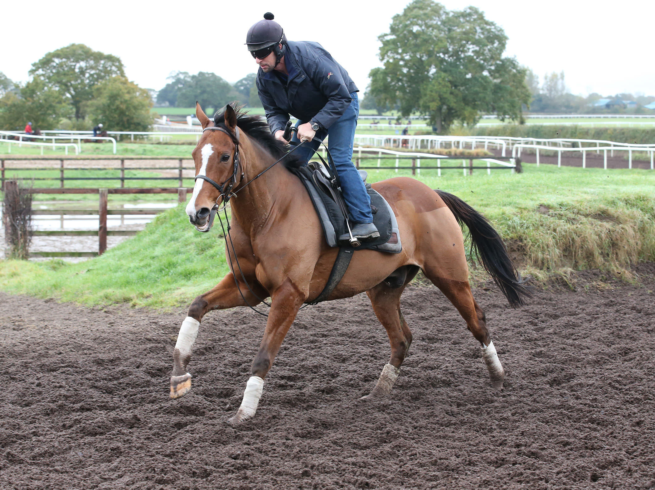 Faugheen and usual rider John Codd on the gallops  (Caroline Norris/HRI)