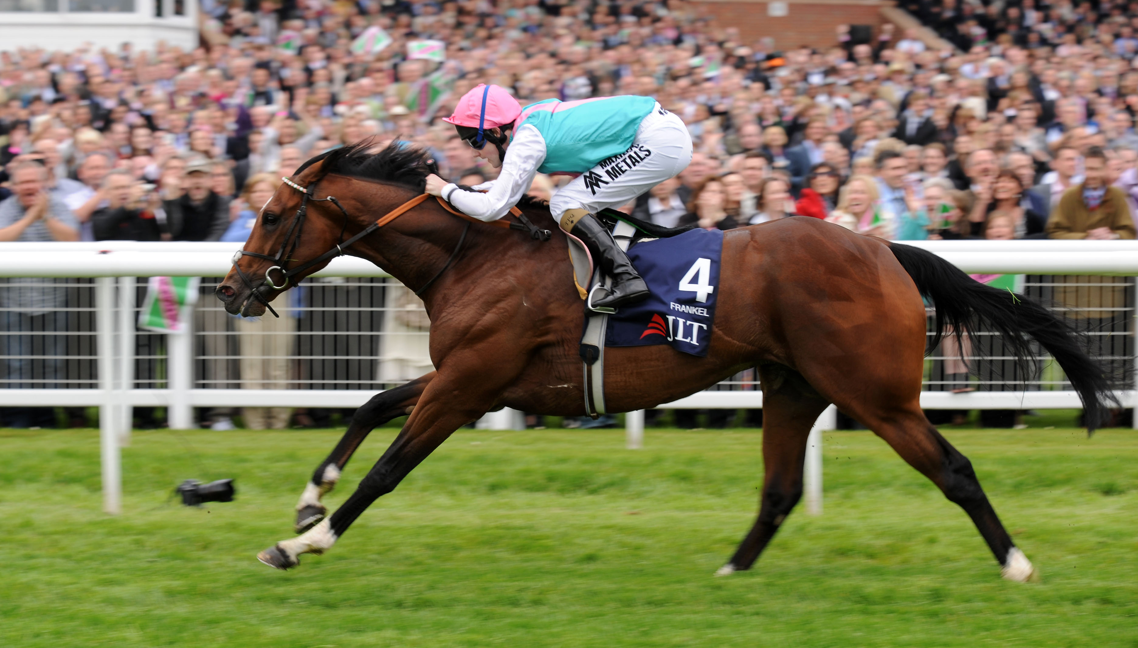 Frankel 2012 - Perfection in equine form at Newbury - Racingfotos