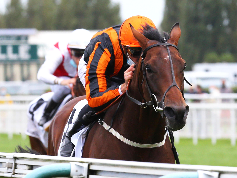 christophe soumillon french champion hurdle betting