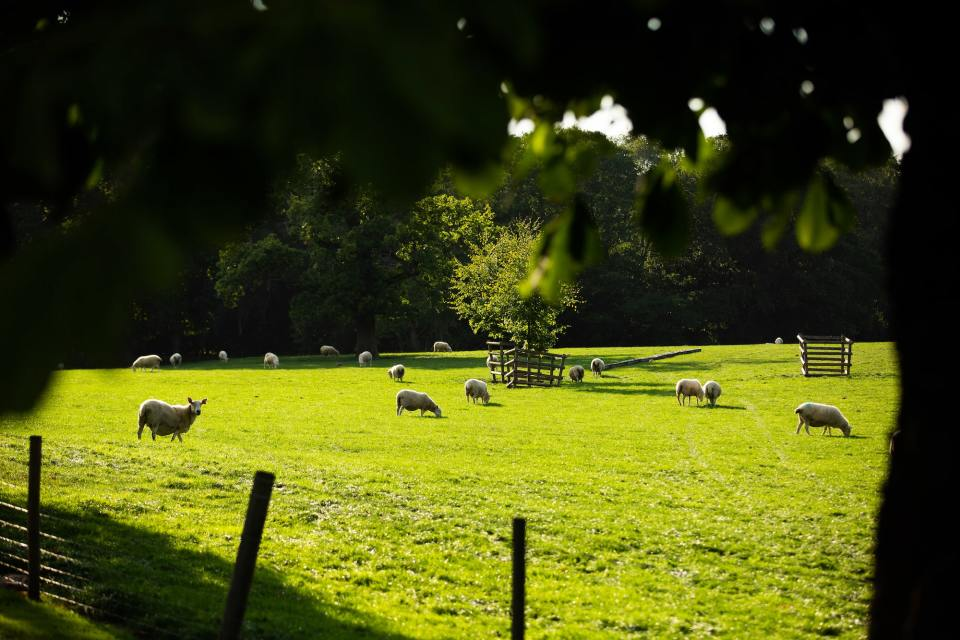 Working farm at Alderley Park