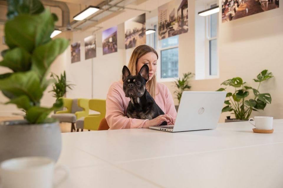 Dog friendly offices