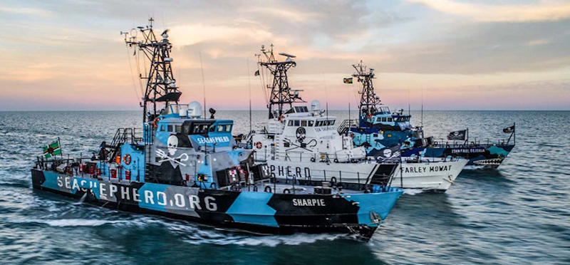 Sea Shepherd Vessels