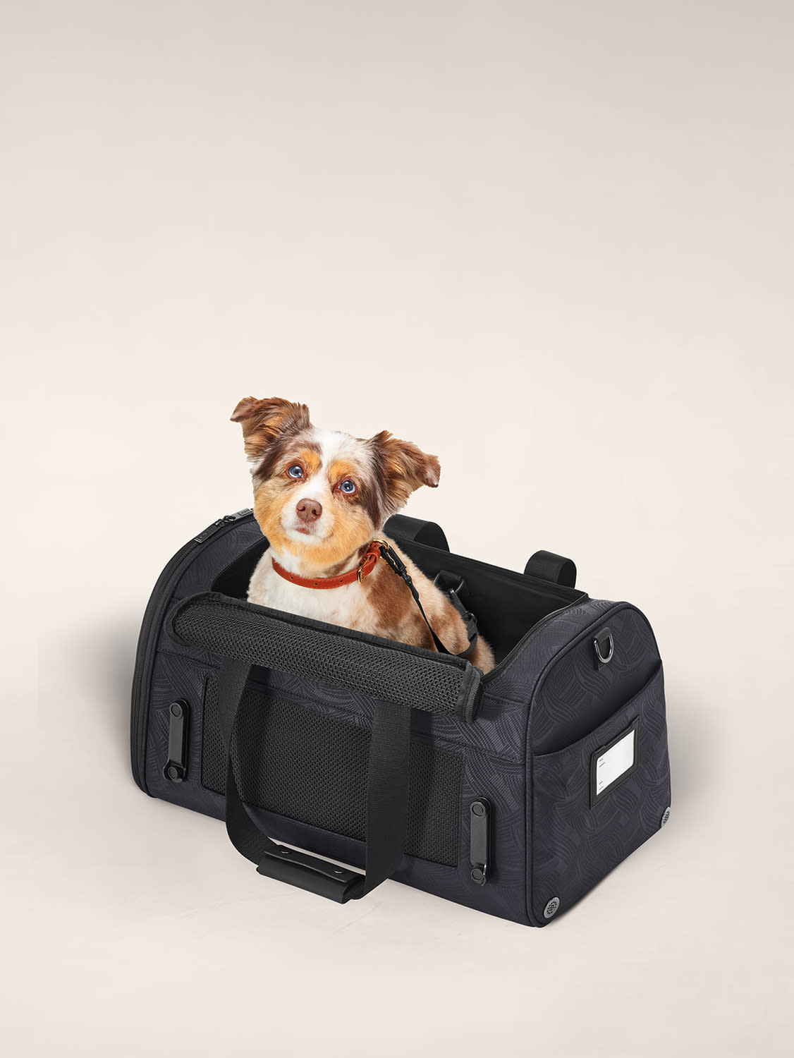 A furry dog peeking from the top of an airline pet carrier.